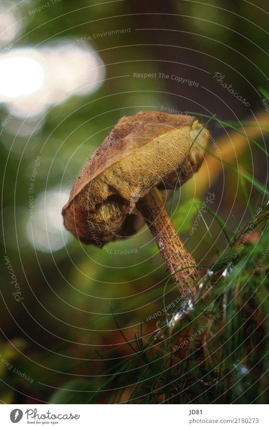 Pilz mit Schneckenschleim Natur Landschaft Tier Urelemente Erde Schönes Wetter Gras Moos Wald braun mehrfarbig grün Schneckenbiss Pilzsucher Farbfoto