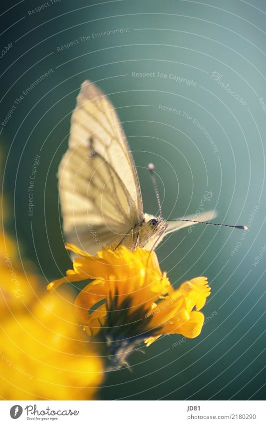 Auf dem Ausguck Natur Pflanze blau Sommer grün Tier Wärme gelb Umwelt Wiese Garten elegant ästhetisch authentisch Schönes Wetter Flügel