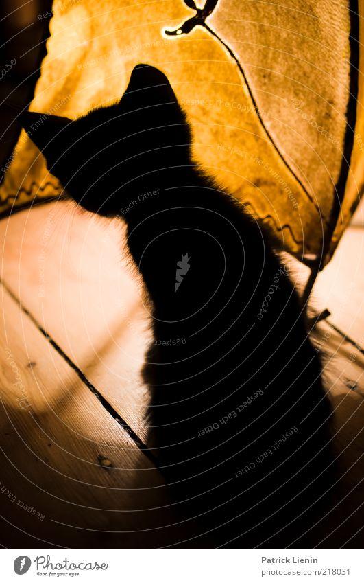 Tom und Jerry schön Tier Spielen Holz Lampe Katze Angst lustig Suche Geschwindigkeit wild Ohr beobachten Neugier Fell
