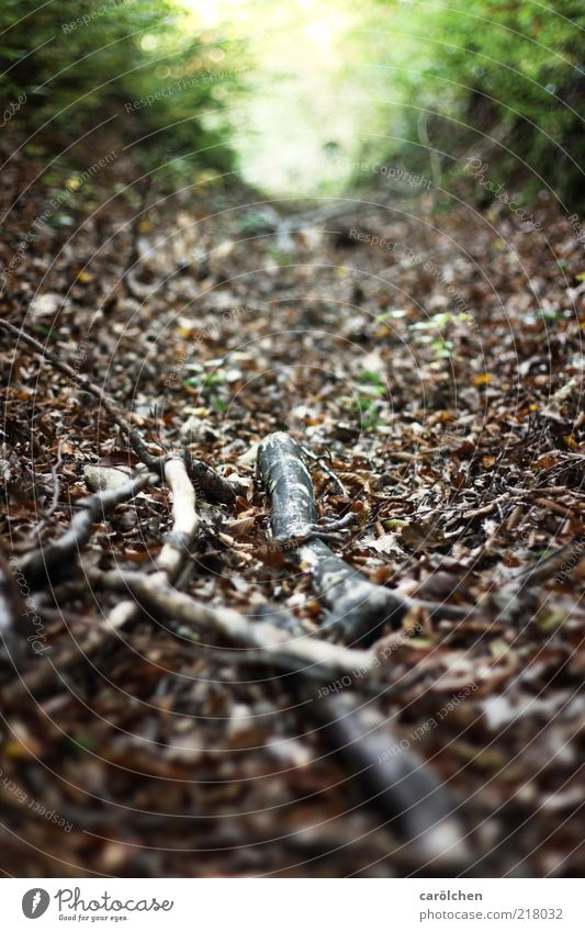 H wie Heimat Natur Landschaft Herbst braun grau grün Ast Blatt Gasse Wege & Pfade Wald Waldboden Sträucher Schwache Tiefenschärfe Farbfoto Gedeckte Farben