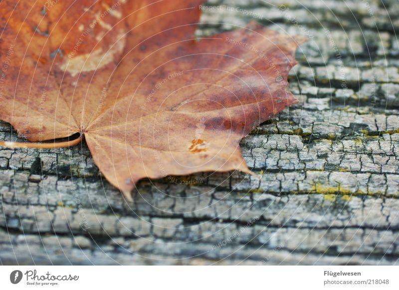 Christoph Maria Herbst II Blatt Einsamkeit Zufriedenheit Warmherzigkeit Stengel November Holz Baumrinde eckig Blattadern Herbstlaub Brandasche Oktober Brennholz