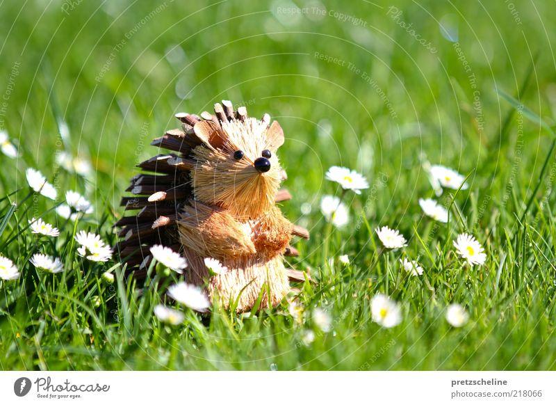 Igel Natur Blume Sommer Tier Wiese Blüte Gras Garten Holz warten sitzen Coolness stehen Tiergesicht Kitsch Dekoration & Verzierung