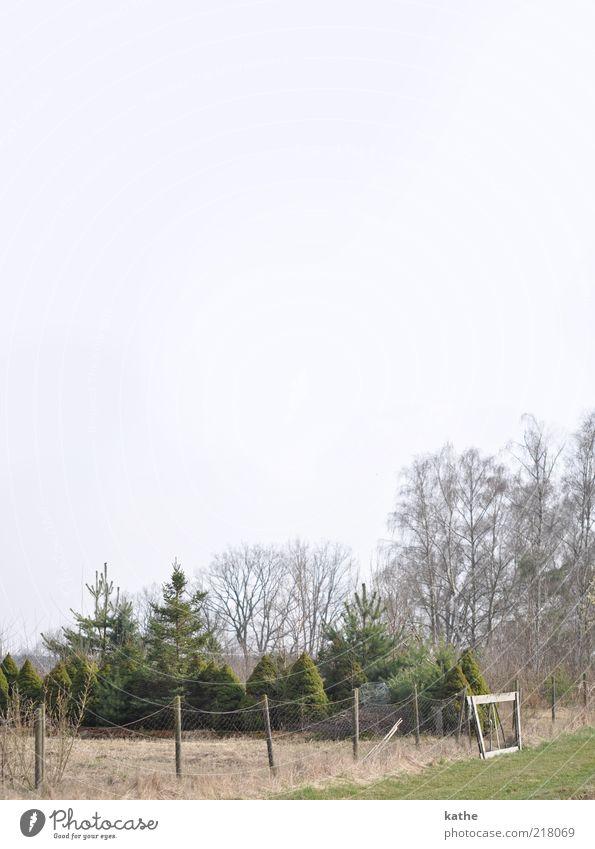 Bonjour tristesse Natur Landschaft Erde Luft Himmel Wolkenloser Himmel Herbst schlechtes Wetter Eis Frost Baum Sträucher Wald frieren Wachstum kalt grün