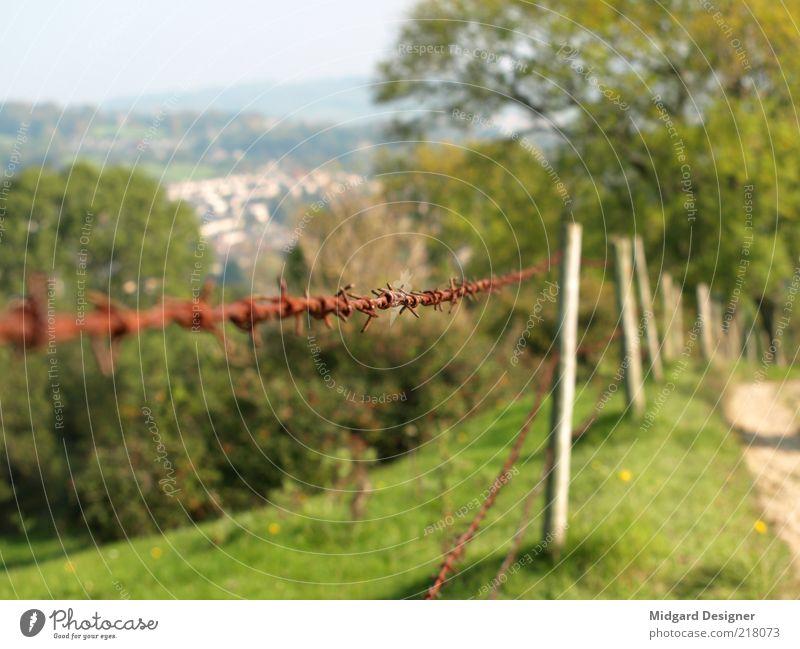 Stachel Draht Zaun Natur Landschaft Sommer Herbst Wetter Schönes Wetter Baum Gras Wiese Hügel Farbfoto Außenaufnahme Experiment Menschenleer Textfreiraum links