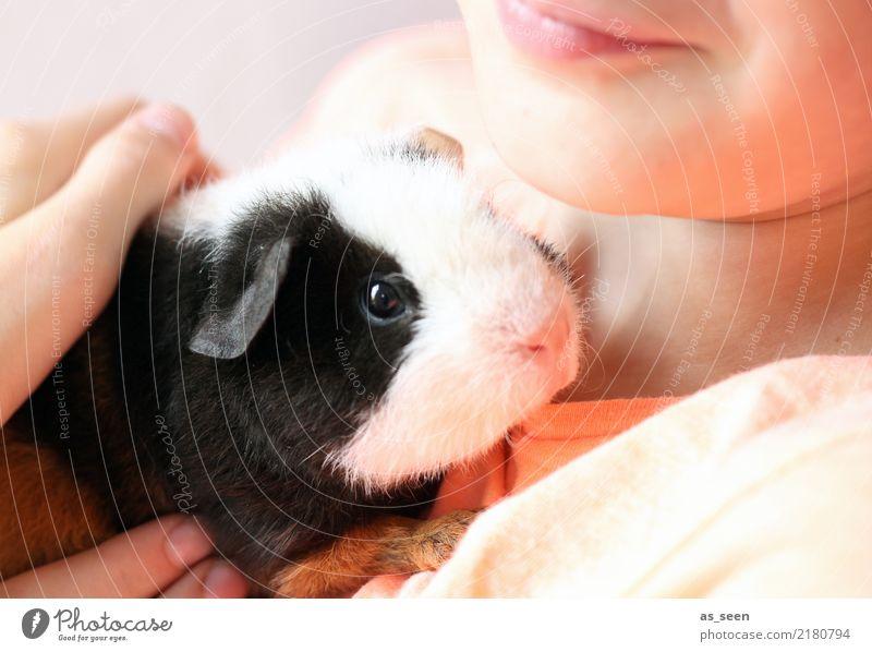 Mensch und Tier Kind Kindheit Haustier Tiergesicht Fell Zoo Streichelzoo Meerschweinchen Nase Auge 1 festhalten Kommunizieren Liebe klein niedlich weich rosa