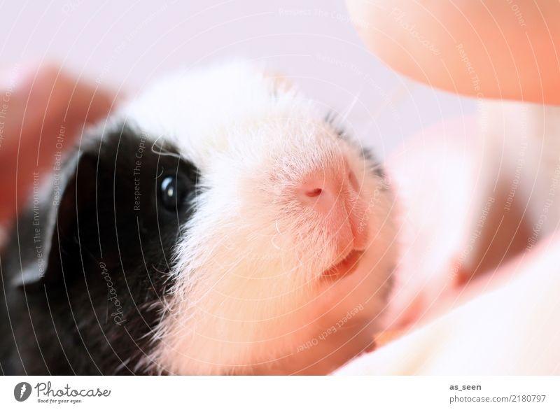 Familienzuwachs weiß Tier schwarz Auge Gefühle klein rosa Kindheit Kommunizieren niedlich Neugier weich Nase Schutz festhalten Haustier