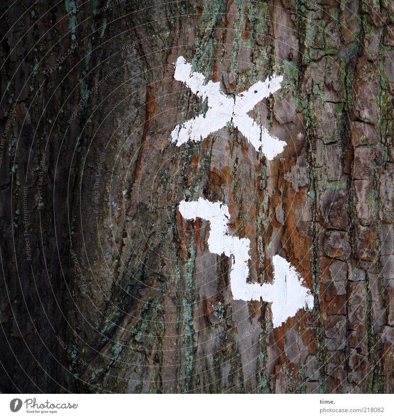 Des Möllner Stadtgeistes Wegeplan Umwelt Natur Pflanze Baum Zeichen Kreuz Pfeil weiß Farbe Baumrinde Haken Farbfoto Gedeckte Farben Detailaufnahme Menschenleer