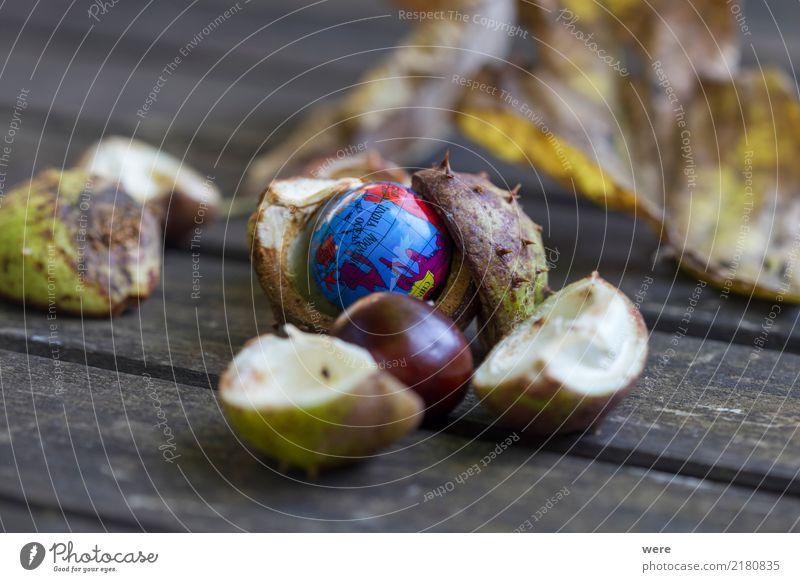 Neue Welten Natur Pflanze Herbst Baum Verpackung Globus neu niedlich Umwelt Umweltverschmutzung Umweltschutz Rosskastanie Kastanie Kastanien Kastanienhülle