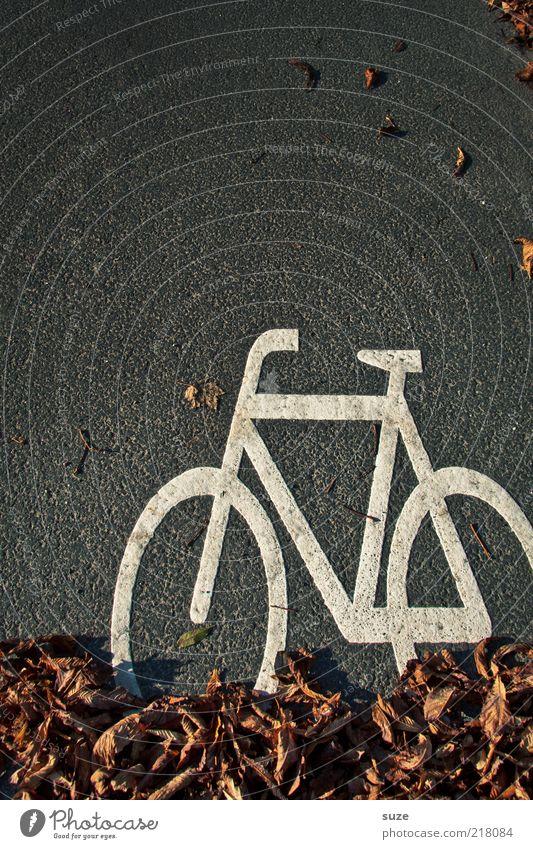 Radler Fahrrad Herbst Blatt Verkehr Straße Zeichen Schilder & Markierungen Verkehrszeichen lustig Fahrradweg Asphalt Grafische Darstellung Fahrbahn diagonal