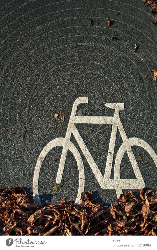Radler weiß Blatt Straße Herbst grau braun Fahrrad lustig Schilder & Markierungen Verkehr Asphalt Zeichen Grafik u. Illustration diagonal Herbstlaub Piktogramm