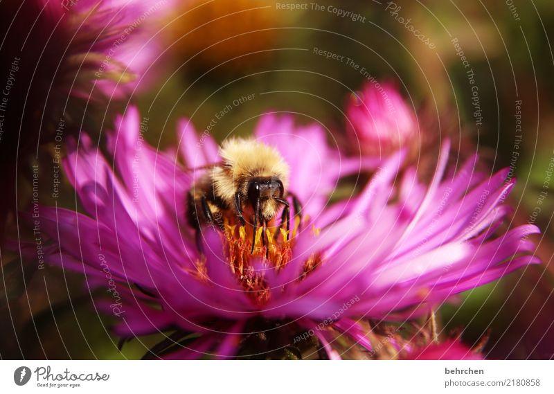 restaurant mit sonnenterrasse Natur Pflanze Tier Sommer Herbst Schönes Wetter Blume Blatt Blüte Astern Garten Park Wiese Wildtier Biene Tiergesicht Flügel 1
