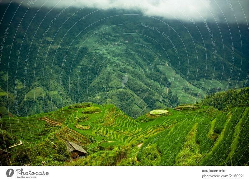 von oben herab Natur grün Pflanze Wolken Berge u. Gebirge Landschaft Umwelt Wachstum authentisch Reisefotografie China Tal Berghang Klischee schlechtes Wetter Reis