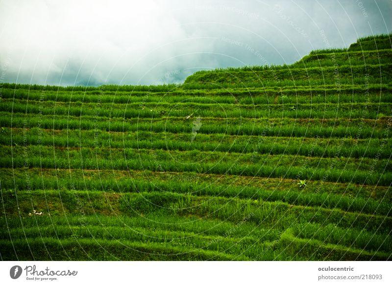 rastlose Reise rauf zum Reis Umwelt Natur Landschaft Pflanze Himmel schlechtes Wetter Reisefotografie Reisfeld Feld alt Wachstum frei kalt grün Tourismus