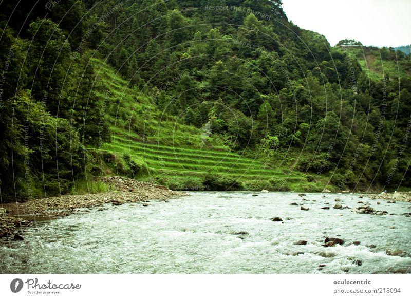 der Berg ruft Umwelt Natur Landschaft Pflanze Wasser Sonnenlicht Sommer Wetter Grünpflanze Nutzpflanze Reis Reisefotografie Bach Guilin China Wald Baum
