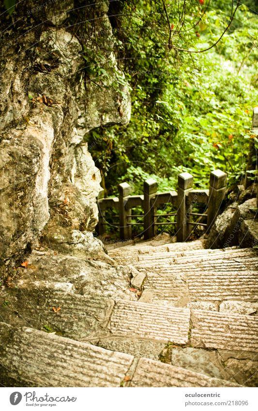 Bergab Umwelt Natur Pflanze Sonnenlicht Sommer Sträucher Grünpflanze Garten Park Wald Klischee robcore Guilin China Treppe Stein Farbfoto Außenaufnahme Tag