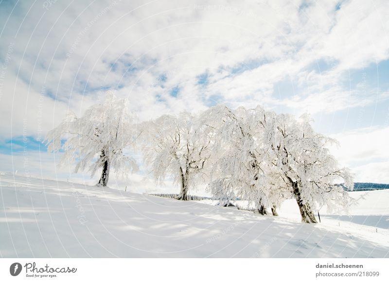 Neuschnee !! Winter Schnee Winterurlaub Klima Wetter Schönes Wetter Eis Frost Baum hell Schwarzwald Schauinsland Raureif blau weiß Textfreiraum oben