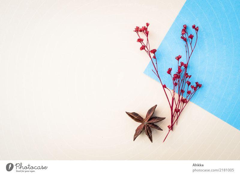 Winter-Combo Dekoration & Verzierung Feste & Feiern Weihnachten & Advent Natur Herbst Sternanis Papier Geschenk Brief Post Fröhlichkeit blau rot Hintergrundbild
