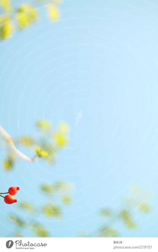 wir wollen auch ins Bild ;-) Natur Himmel grün blau Pflanze rot Sommer Blatt Herbst Hintergrundbild Frucht frisch Wachstum Sträucher wild natürlich