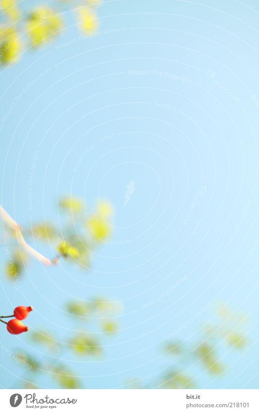 wir wollen auch ins Bild ;-) Natur Pflanze Himmel Herbst Schönes Wetter Sträucher Blatt Wildpflanze frisch natürlich wild blau grün rot Zweige u. Äste