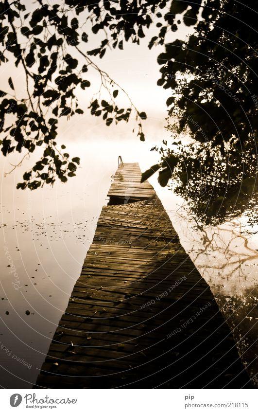 offeses ende Umwelt Natur Urelemente Wasser Herbst Schönes Wetter Baum Blatt Ast Seeufer Mecklenburg-Vorpommern Holz Fernweh ruhig Morgen Holzbrett Nebel Steg