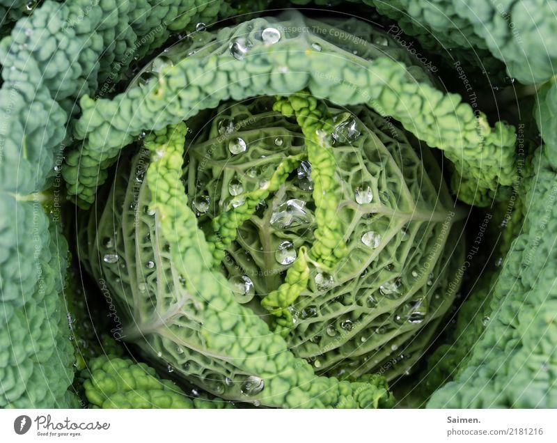 Wirsing mit Wassertropfen Verkabelung kohl Gemüse gesund Ernährung gesunde ernährung Garten Farbfoto Natur Veganer Vegetarische Ernährung Gesunde Ernährung