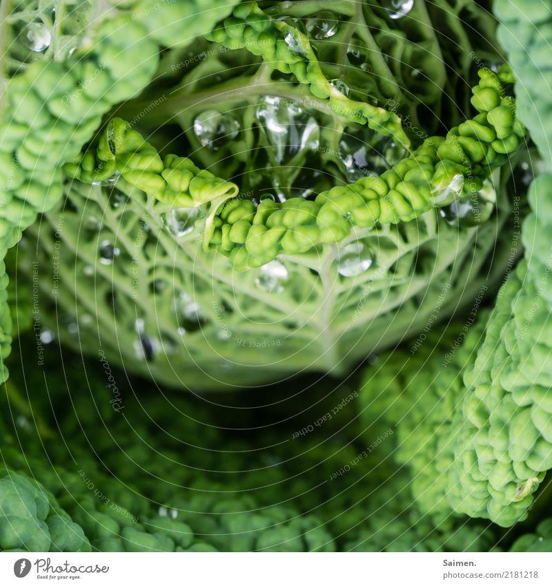 Wirsing Wassertropfen Natur Detailaufnahme Garten Grün Farbfoto wachsen Gemüse pflanze leben gesund natürlich Veganer Vegetarisch Bioprodukte Ernährung lecker