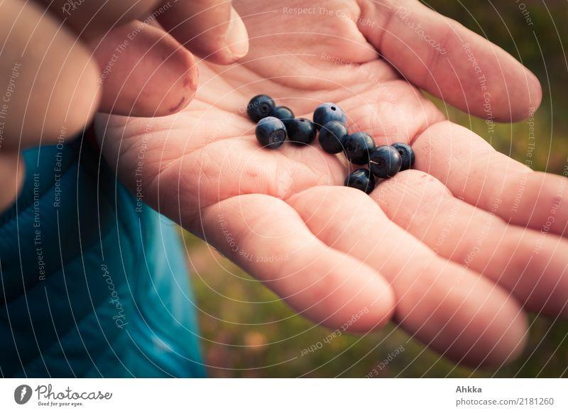 Blaubeerfang Natur blau Hand Essen Umwelt Herbst Gesundheit klein Glück Lebensmittel Freizeit & Hobby Zufriedenheit wild Kindheit frisch Fröhlichkeit