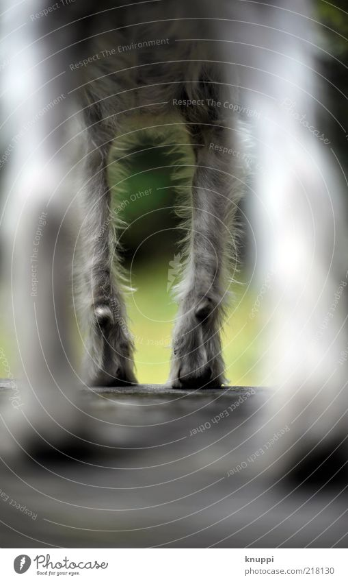 underdog weiß grün ruhig schwarz Tier Hund Beine Tierjunges warten stehen wild außergewöhnlich beobachten Fell Pfote