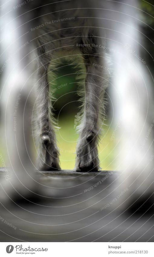 underdog weißhaarig kurzhaarig Tier Haustier Hund Pfote Fährte 1 Tierjunges beobachten stehen warten außergewöhnlich wild grün schwarz geduldig ruhig Terrier