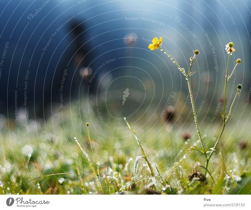 grasgeflüster Umwelt Natur Erde Wasser Wassertropfen Himmel Herbst Schönes Wetter Pflanze Blume Gras Sträucher Grünpflanze Wiese kalt Tau Farbfoto Außenaufnahme