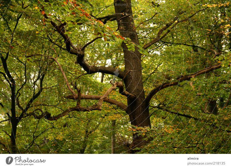 Eichenfinger Natur grün Baum Pflanze ruhig Herbst Umwelt Landschaft Holz Park braun Klima Romantik Frieden geheimnisvoll Baumstamm