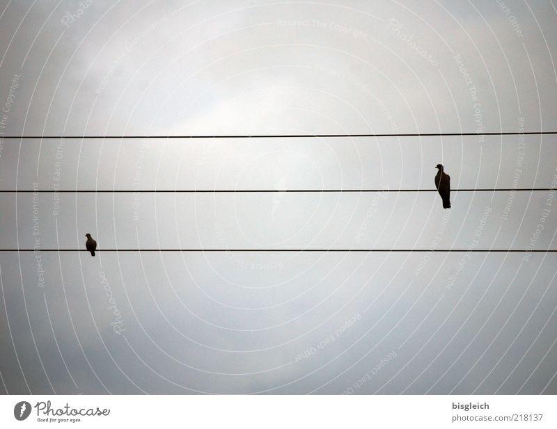 Hochspannung Vogel 2 Tier Tierpaar sitzen ruhig Selbstbeherrschung Hochspannungsleitung Himmel Notenlinien Musiknoten Farbfoto Gedeckte Farben Außenaufnahme