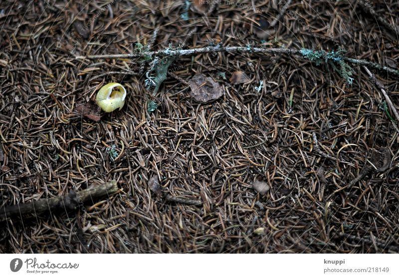Ruhepol Natur alt ruhig Tier dunkel Herbst Holz braun Umwelt Erde liegen Moos Schnecke Waldboden Schneckenhaus Tannennadel