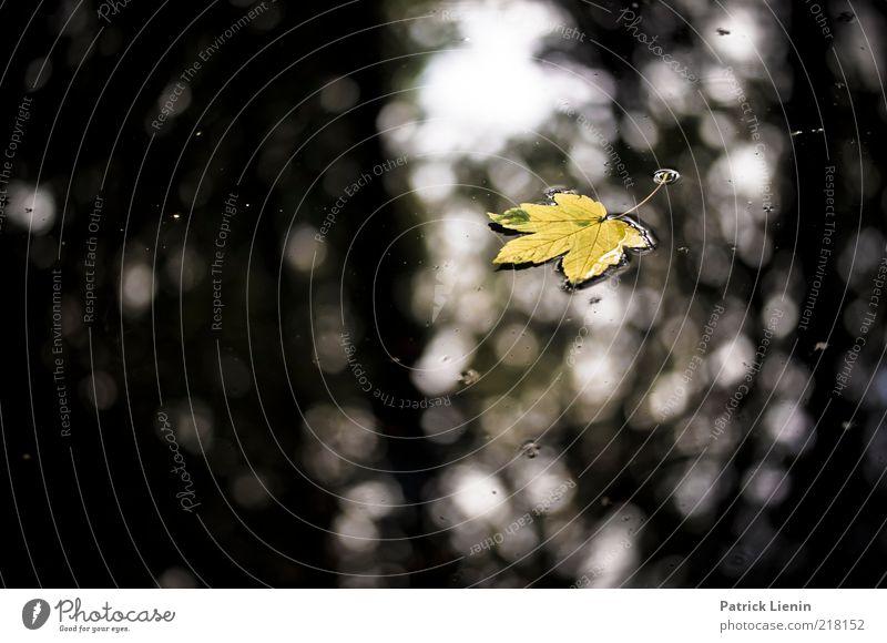 Time. has told me Natur Wasser schön grün Pflanze Blatt schwarz Einsamkeit gelb dunkel Herbst Traurigkeit See Stimmung Umwelt nass