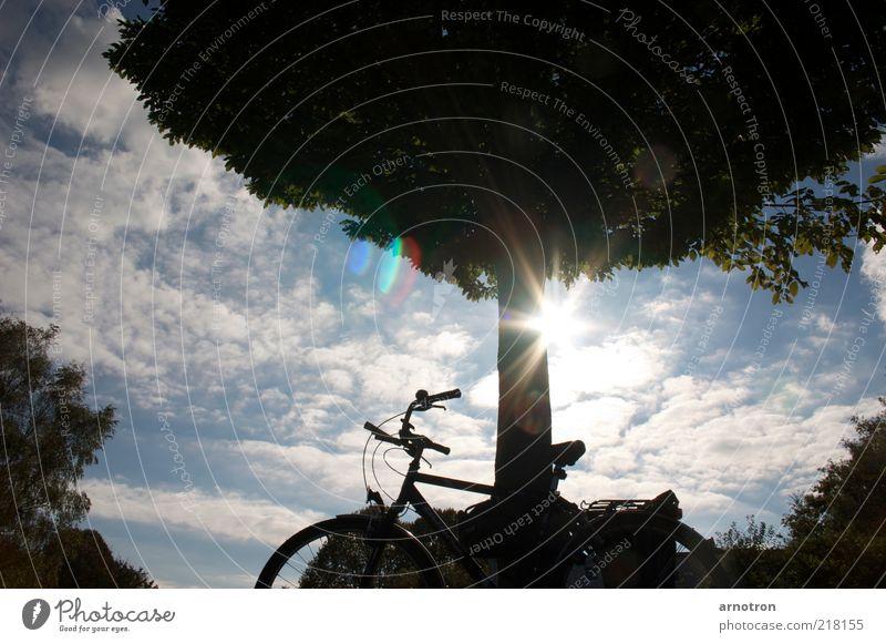 Lean your bike to a tree and enjoy the sunshine Fahrradtour Sonne Natur Himmel Wolken Schönes Wetter Baum Gelassenheit ästhetisch Erholung Pause Farbfoto