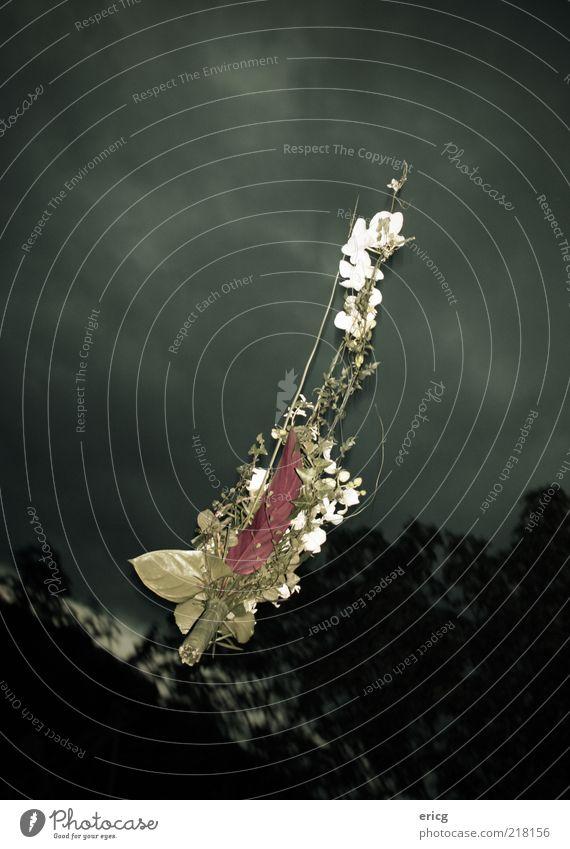Brautstrauss Himmel grün Baum rot Blume Wolken Luft Feste & Feiern fliegen fallen Blumenstrauß Zukunftsangst Ritual Pflanze Wolkenhimmel