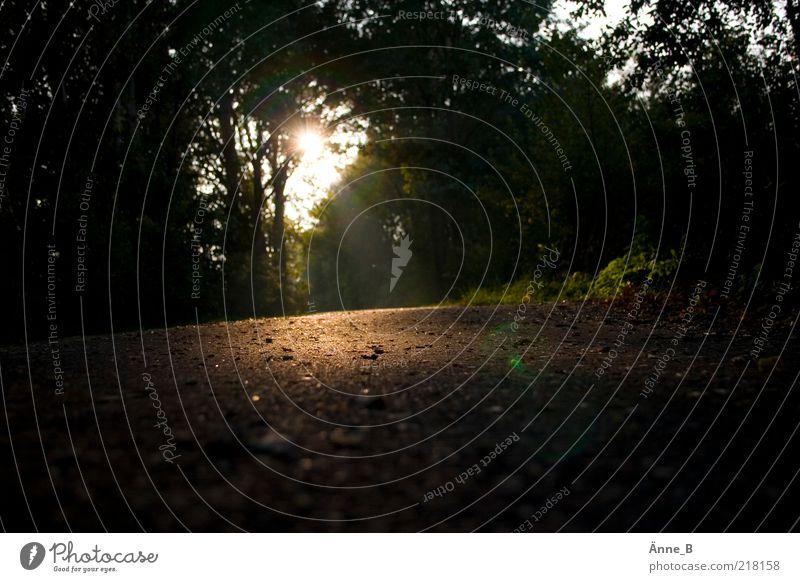 Für Abkürzungen ... Erholung Natur Pflanze Erde Herbst Baum Wald Fußweg Stein leuchten dunkel trocken unten braun gold Wege & Pfade Spazierweg Farbfoto