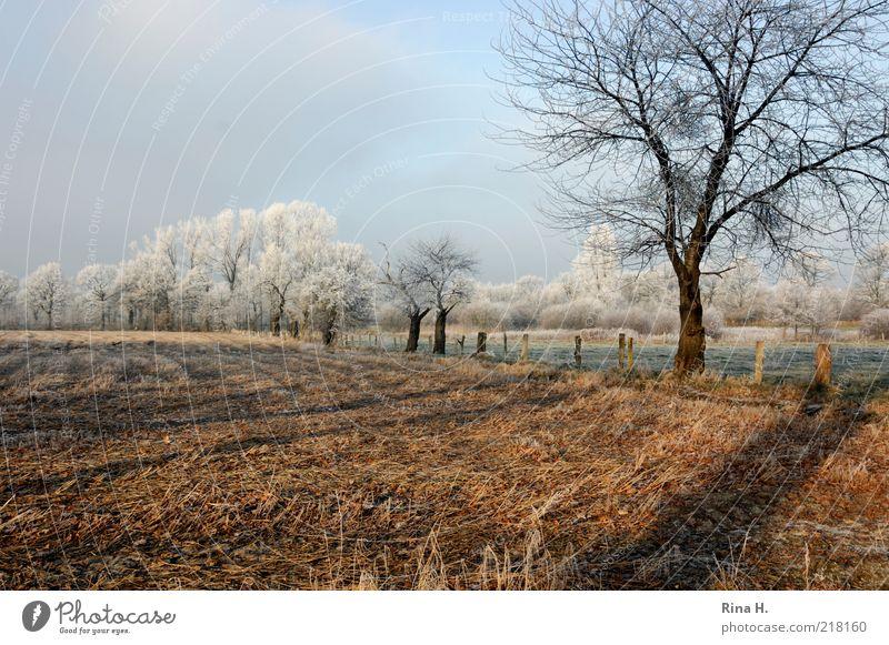 Winter Natur Himmel Baum ruhig kalt Wiese Landschaft Feld Wetter Frost natürlich Schönes Wetter Raureif Umwelt