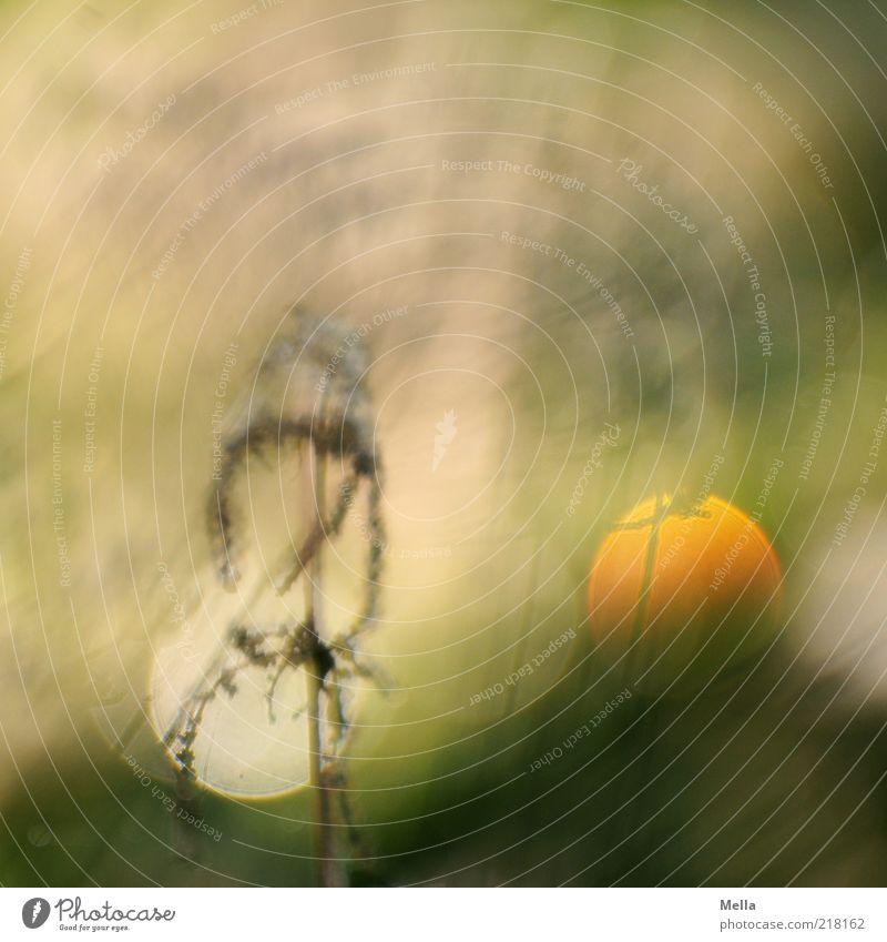 Sundown Natur schön Pflanze Wiese Gras Stimmung orange glänzend Umwelt gold natürlich geheimnisvoll außergewöhnlich leuchten Surrealismus Reflexion & Spiegelung