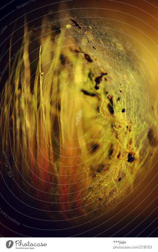 mikrokosmos. Natur grün Pflanze Sommer gelb Wiese Umwelt Gras gold Wachstum außergewöhnlich zart Moos Halm Makroaufnahme filigran