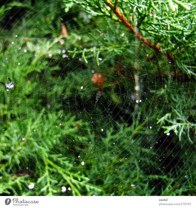www Natur schön weiß grün Pflanze schwarz braun glänzend klein elegant Umwelt Wassertropfen nah einfach dünn