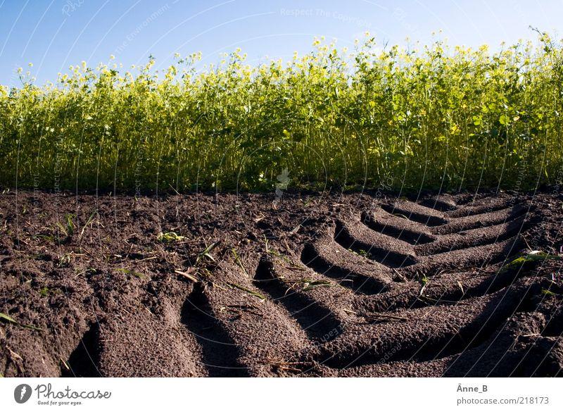 Trecker fahn! Rapsfeld Feldarbeit Umwelt Erde Sommer Herbst Schönes Wetter Pflanze Nutzpflanze Wachstum blau braun gelb grün Traktorspur