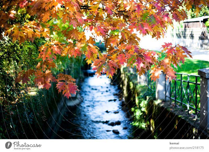{300} Im Herbst Umwelt Natur Landschaft Pflanze Urelemente Wasser Sonnenlicht Klima Schönes Wetter Baum Gras Blatt Park Bach Fluss leuchten nass gelb rot
