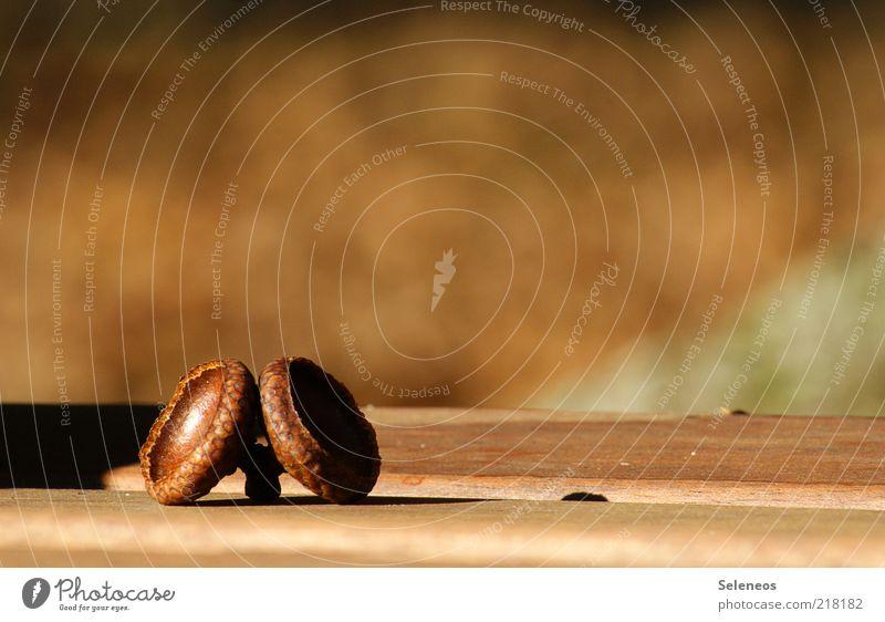doppeltes Hütchen Natur Pflanze Herbst Holz braun klein Umwelt ästhetisch liegen natürlich Schönes Wetter herbstlich Eicheln