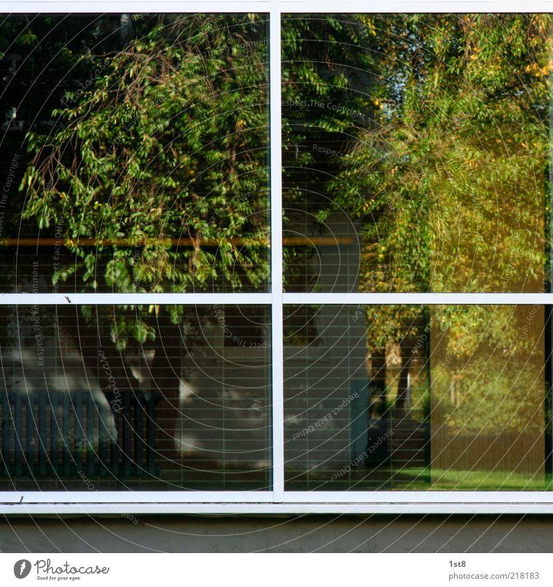 windows 10 Pflanze Baum Gras Garten Haus Bauwerk Gebäude Mauer Wand Fassade Fenster eckig Heizung Baumstamm Rahmen Farbfoto Außenaufnahme Strukturen & Formen