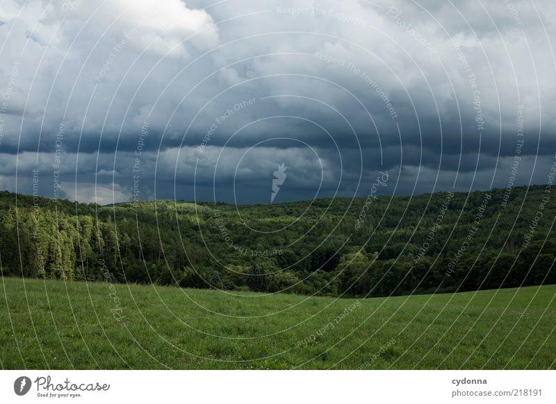 Schöne Gefahr ruhig Ausflug Ferne Umwelt Natur Landschaft Gewitterwolken Unwetter Wiese Wald einzigartig Horizont schön Vergänglichkeit Wandel & Veränderung