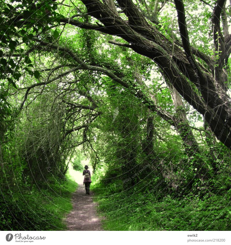 Grünes Gewölbe Mensch Natur grün Baum Pflanze Blatt Erwachsene Wald Umwelt Landschaft Gras Wege & Pfade Denken gehen wandern Sträucher