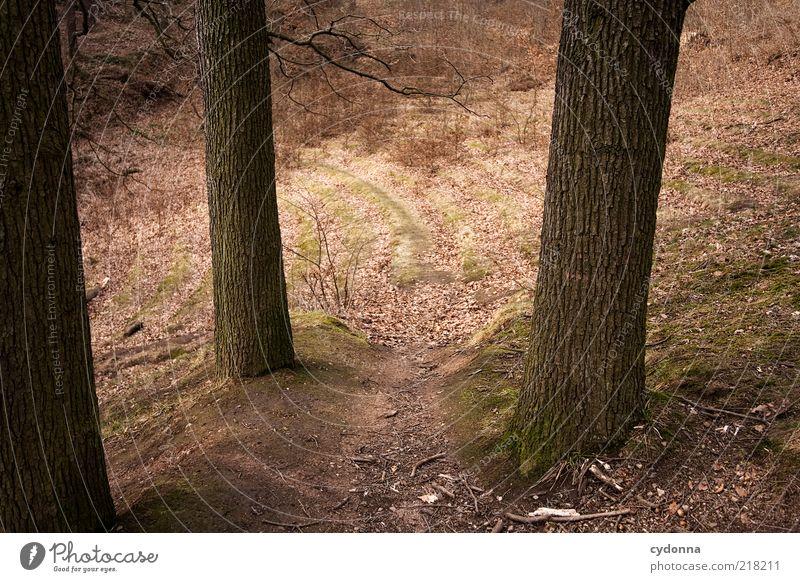 Waldbühne Natur Baum ruhig Leben Herbst Umwelt Wege & Pfade träumen Zeit einzigartig Wandel & Veränderung Vergänglichkeit Ende geheimnisvoll entdecken