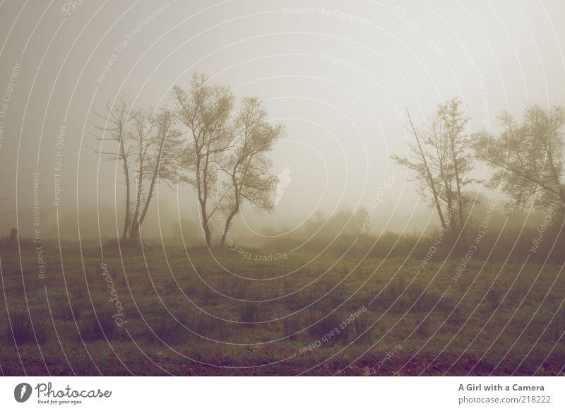 Endzeit Stimmung Natur weiß Baum Pflanze kalt Herbst Gras grau träumen braun Feld Nebel Umwelt schlafen trist authentisch
