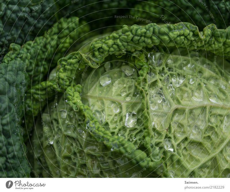 Wirsing Grünkohl Gemüse Garten gesund gesunde ernährung Wassertropfen Glanz Sommer gärtnern Anbau Ernährung Gesundheit Nahaufnahme Lebensmittel